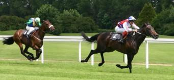 Apuestas Caballos: Tipos de apuestas de caballos