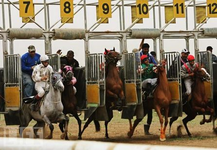 Lay progresivo en carreras de caballos